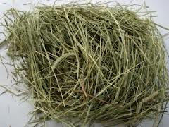 Hay, Dried Grass & Herbs